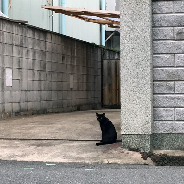 Chat Noir photo by izy Rodriguez