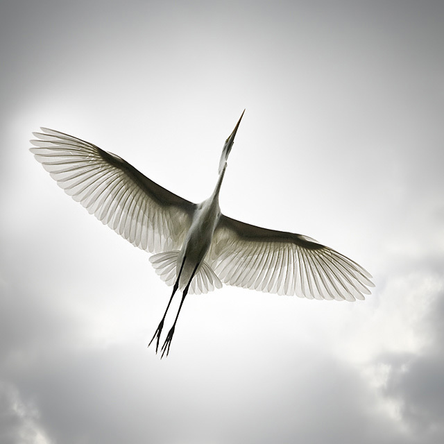 spread your wings and fly away